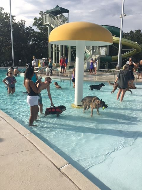 People with their dogs in the pool